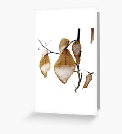 Young Beech Leaves in the Snow Greeting Card