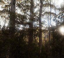 Sunlight by Ron Finkel