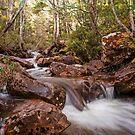 Mersey River - Overland Tack Tasmania by Ron Finkel