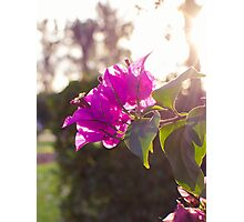 The heart of spring Photographic Print