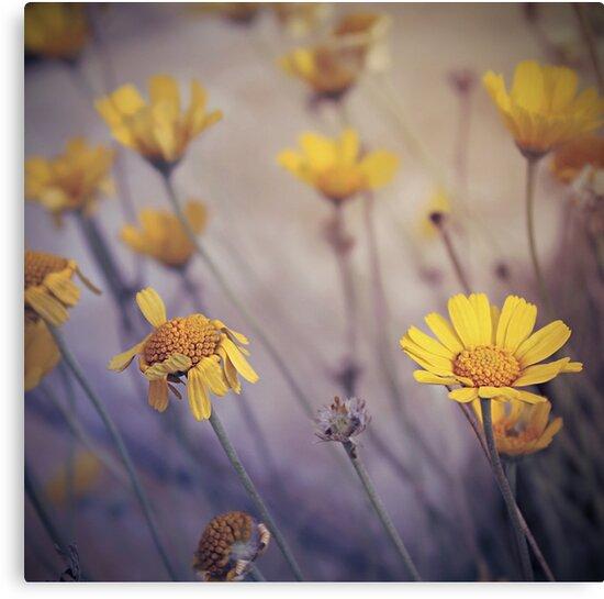 May Daze by Trish Mistric