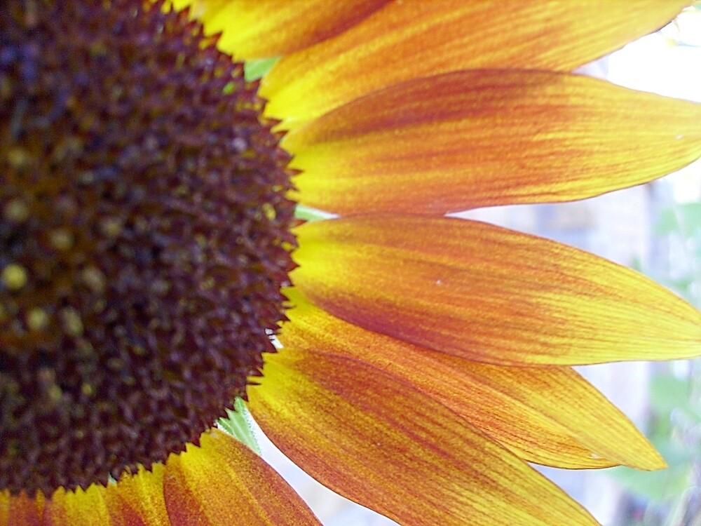 Sunflower by Ana Belaj