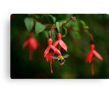 Fuchsia at Loch Na Fooey (wide) Canvas Print