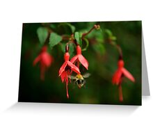 Fuchsia at Loch Na Fooey (wide) Greeting Card