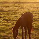 7.9.2016: Horse on Pasture II by Petri Volanen