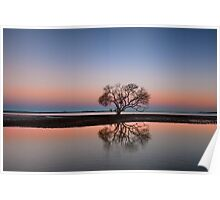 The Twilight Tree - Victoria Point Qld Australia Poster