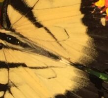 Eastern Tiger Swallowtail (Glaucus) AKA-Tiger Swallowtail Sticker