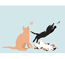 Playing cats Photographic Print