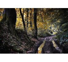 October Wood Photographic Print