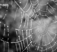 Frozen Spiderweb by Alexandra Vaughan Photography & Design