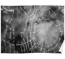 Frozen Spiderweb Poster