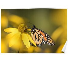 Fall Monarch 2016-5 Poster