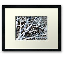 Damn If It Ain't Cold Out Here! Framed Print