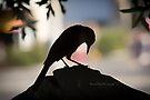 The Raven by Yannik Hay