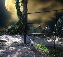 Walking in Moonlight by Christine Lake