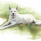 white sled dog watercolor by Mike Theuer