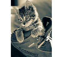 Kitten in a Boot  Photographic Print