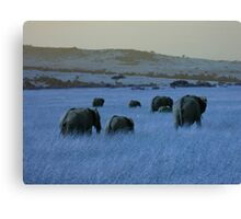 Elephant Family in Blue Canvas Print