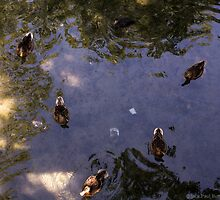Triangle Of Ducks by Jack Butcher