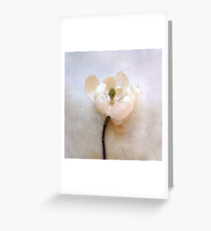 Sweet Bay Magnolia Bloom Greeting Card