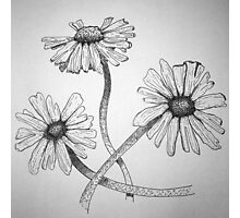 Daisy Sketch Photographic Print