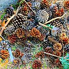 conifer cone family by terezadelpilar~ art & architecture