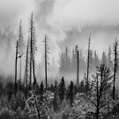 Geyser Steam in B/W by Linda Sparks