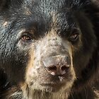 Andean Bear named Woof by Linda Sparks