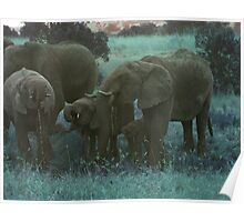 Elephants Drinking in Turquoise Poster