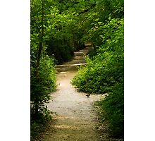 Lonely Walk Photographic Print