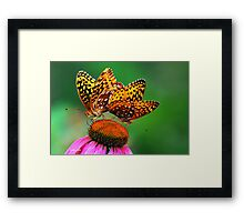 Butterfly Twins Framed Print