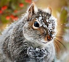 Wild Expedition Squirrel Art by Christina Rollo
