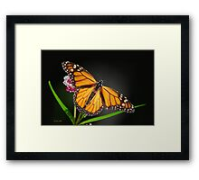 Open Wings Monarch Butterfly Framed Print