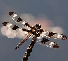Luminous Dragonfly by Christina Rollo