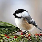 Pine Chickadee by Christina Rollo