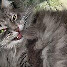Demented Kitty by LouiseK