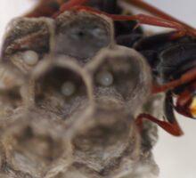 Wasp Egs  Sticker