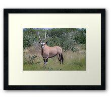 Black & Tan – A Proper Oryx Pose Framed Print