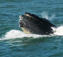 Humpback Whale Blowhole Sticker