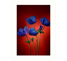 Blue poppies aganst red Art Print