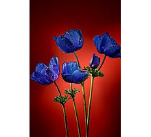 Blue poppies aganst red Photographic Print