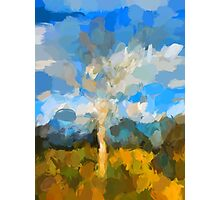 Bare Tree in the Evening Light Photographic Print