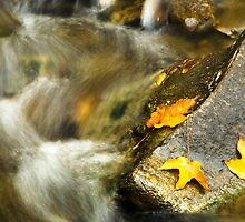 Autumn Creek by Christina Rollo