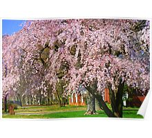 Hugh Weeping Cherry Tree Poster