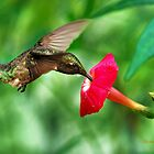 Sweet Satisfaction Hummingbird by Christina Rollo