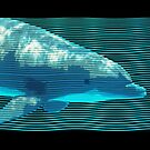 Dolphin in Waves by Doty