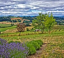 Lavender Farm View by thomr