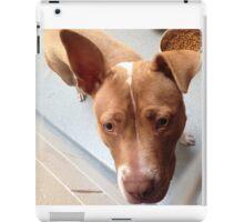Pitbull Stella iPad Case/Skin