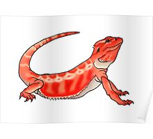 Red Bearded Dragon Poster