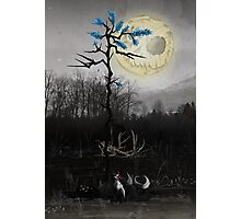 Dark Fox Photographic Print